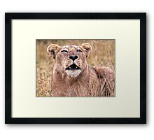 Cross Eyed Lioness Framed Print