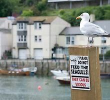 A seagull stands defiantly on a Do Not Feed the Seagulls notice, Looe, Cornwall, UK by silverportpics