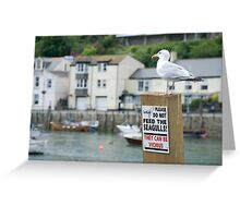 A seagull stands defiantly on a Do Not Feed the Seagulls notice, Looe, Cornwall, UK Greeting Card