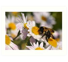 The Last Bumble Bee Art Print