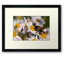 The Last Bumble Bee Framed Print