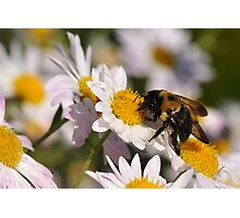 The Last Bumble Bee Photographic Print