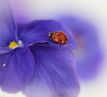Ladybird on purple flower by Ellen van Deelen