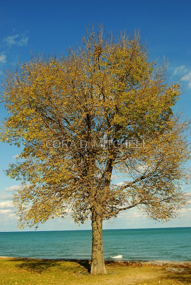 Cora's Tree autumn special by CORA D. MITCHELL