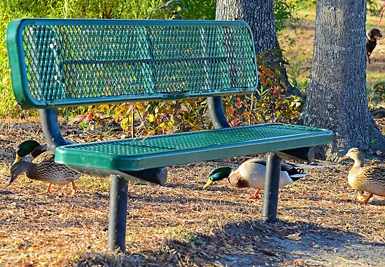 GUARDIANS OF THE BENCH by TJ Baccari Photography