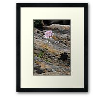 Single Stalk of Thrift Framed Print