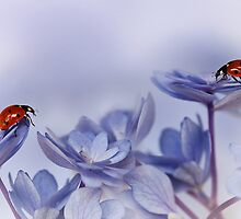 Ladybirds on purple hydrangea... by Ellen van Deelen