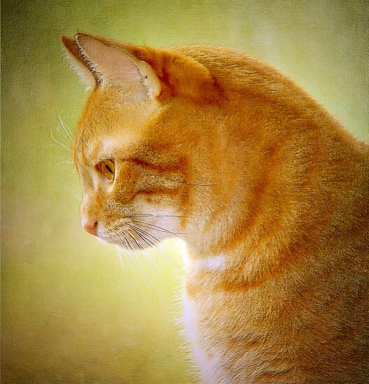 Cat Portrait by Margaret S Sweeny