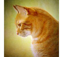 Cat Portrait Photographic Print