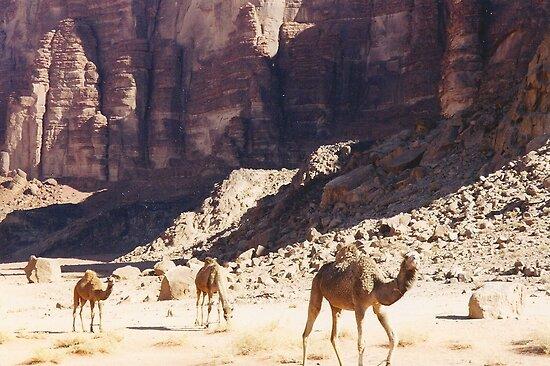 Camels  by vulcanluver