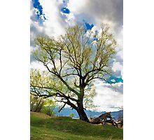 tree on the sky Photographic Print