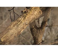 Tree Mating Caught in the Act Photographic Print