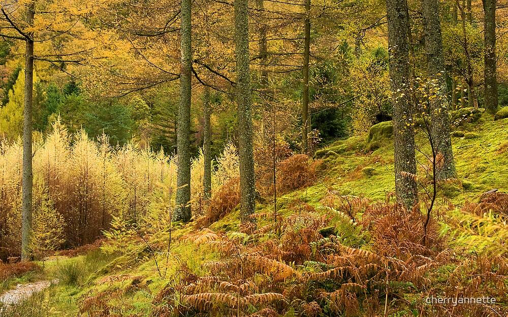 Walk through the forest by cherryannette