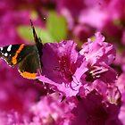 Pink Flutter by Michael  Kemp