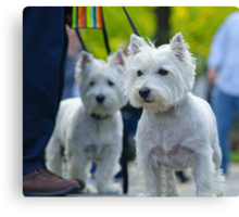 Westies of Central Park Canvas Print