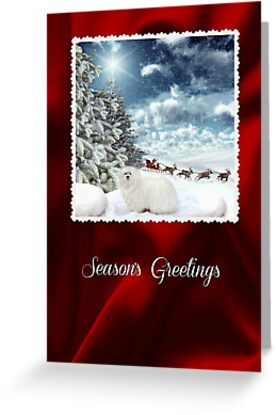 Snowdrop the Maltese Christmas Card by Morag Bates