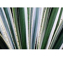Green Four Photographic Print
