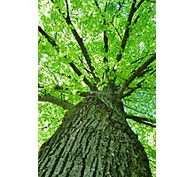 Green Tree Photographic Print
