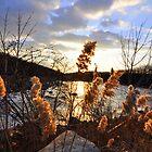Golden Sunset by Haz Preena