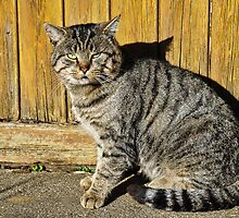 I'm A Mouser Not A Model by Susie Peek