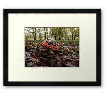 Wild Mushroom #556TH Framed Print