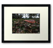 Wild Mushroom #778UYH Framed Print