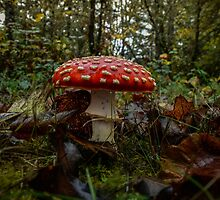 Wild Mushrooms #9987UJK by Charles & Patricia   Harkins ~ Picture Oregon