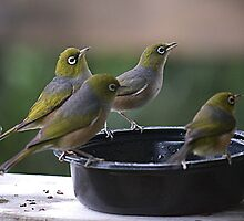 Hey you in there - our bowls empty.......! by Roy  Massicks