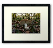 Wild Mushrooms #4456TGM Framed Print