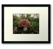 Wild Mushroom #4554RRF Framed Print