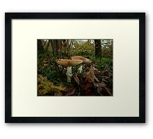 Wild Mushrooms #7786YH Framed Print