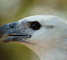 The Profile - Sea Eagle by ExposureTherapy