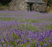 Bluebells at St Johns, Ballachulish by cuilcreations