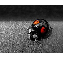 Black Ladybird with Red Spots Photographic Print