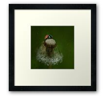 On the dandelion in a rainy day Framed Print