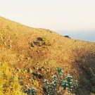 Ocean Vista by Ben Reynolds