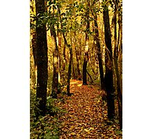 Gilded Path Photographic Print