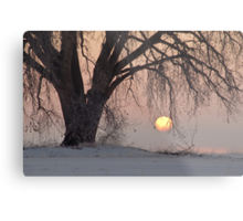 Sunrise Tree Metal Print