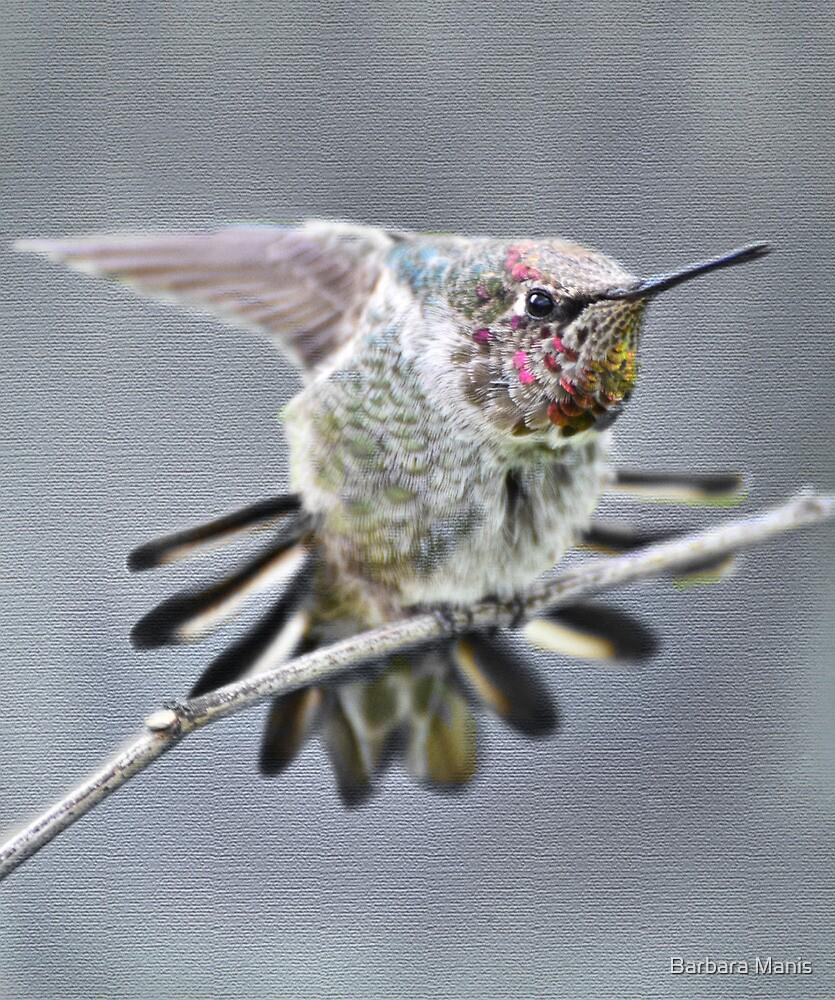 Flutter of Wings by Barbara Manis