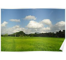 Paddy Field in Sri Lanka Poster