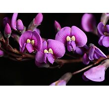 Purple#2 Photographic Print