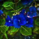 Blue Mood by Steve Walser