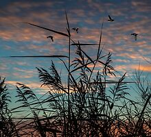 wild grass with sunrise by peter wyatt