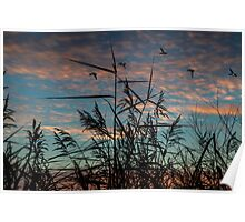 wild grass with sunrise Poster