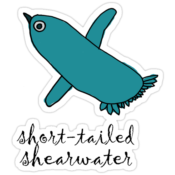 Short Tailed Shearwater - designed by Willow by dale rogers