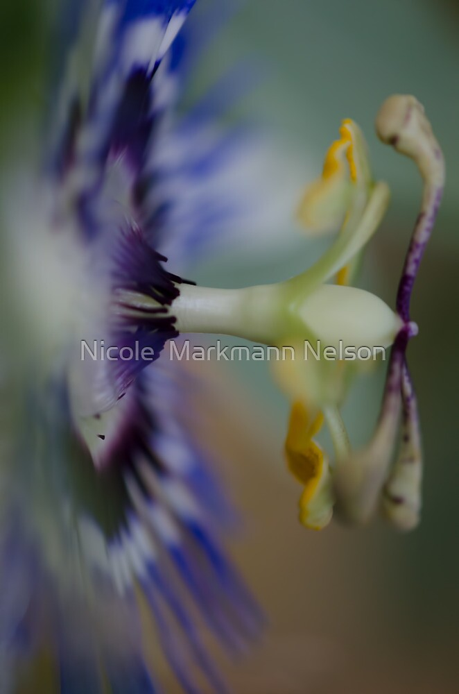 The side of Passion by Nicole  Markmann Nelson