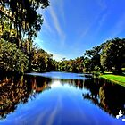 Beautiful Pond by TJ Baccari Photography
