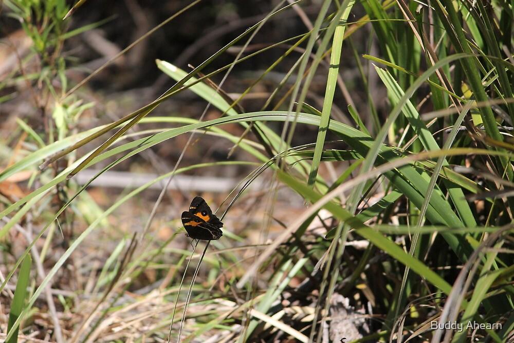 Butterfly in the bush by Buddy Ahearn
