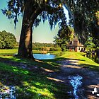Oak and Pond by TJ Baccari Photography