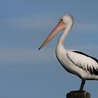 Mr Percival - Redland Bay Qld Australia by Beth  Wode